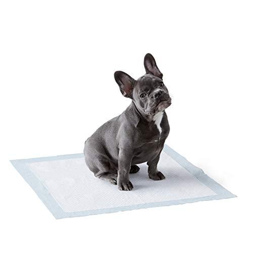 Amazon Basics Puppy Pads Trainingsunterlagen für Welpen, Standardgröße, 100 Stück