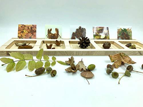Sortierbrett mit 36 Karten Sortieren Naturmaterialien Montessori Waldorf Pikler Zahlen Farben Formen Rechnen...