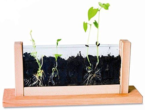Beobachtungsstation für Wurzeln und Pflanzenwachstum, Montessori-Material zur Biologie